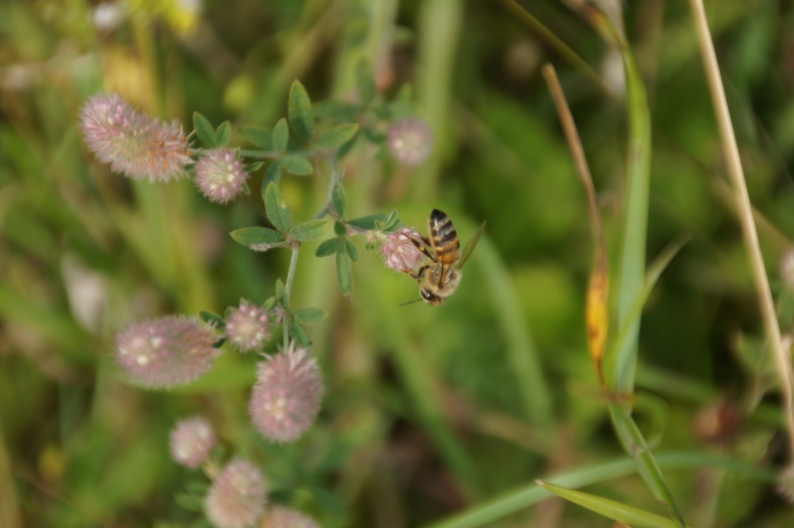 Bee upside-down