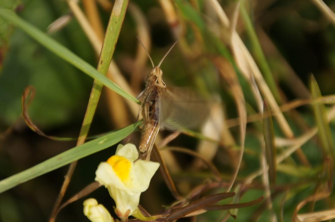 locust ready to jump