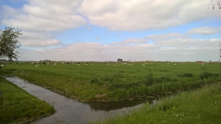 The Frisian grasslands