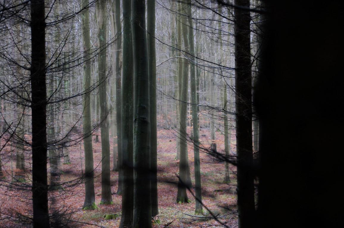 shadowy wood