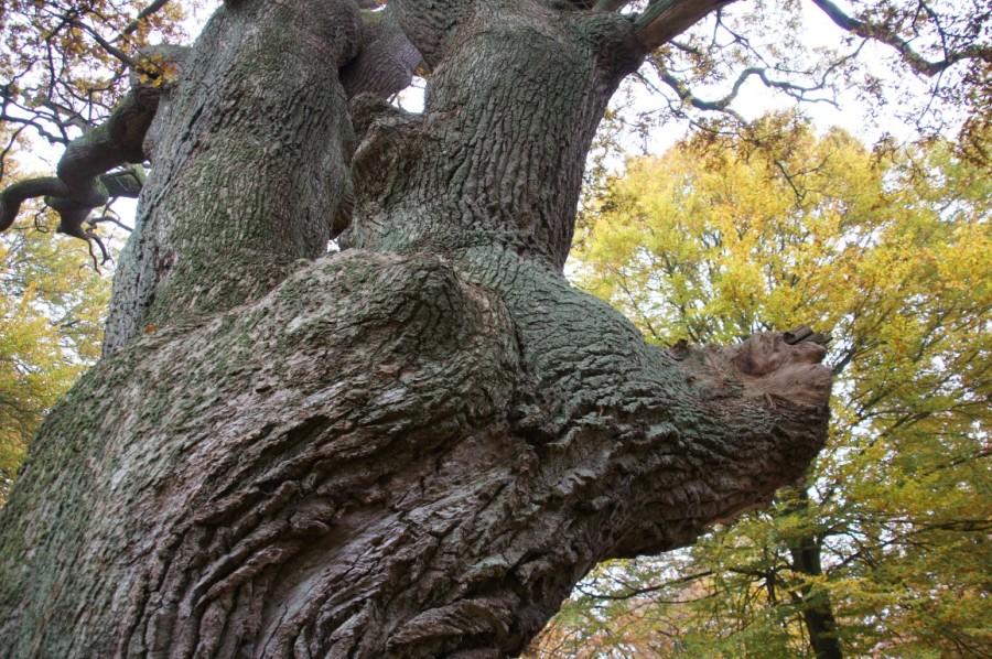 oak tree goes smash!