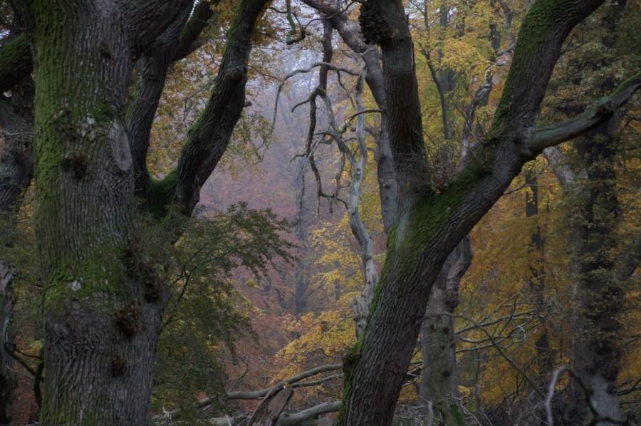 autumn in oak wood