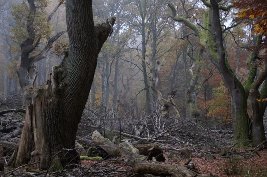 smoky aftenoon in oak wood