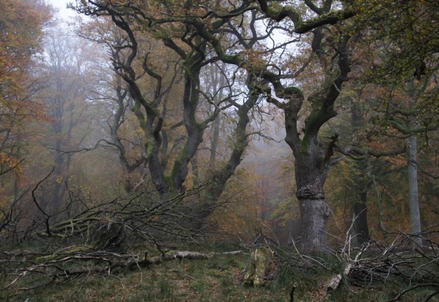 smoky autumn in oak wood
