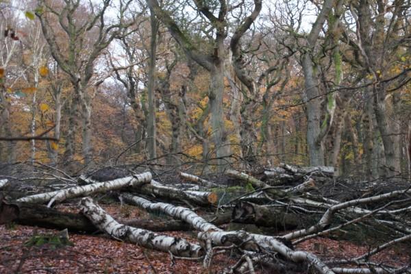late autumn in oak wood