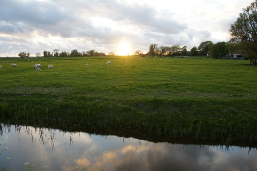floating meadow in sunset